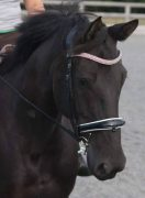 Buttons modelling her Black Diamond, Fuchsia and Black Diamond curved Preciosa Crystal browband.