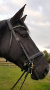 Buttons modelling her alternating Vitrail Light and Crystal AB curved 6mm wide Preciosa Crystal browband